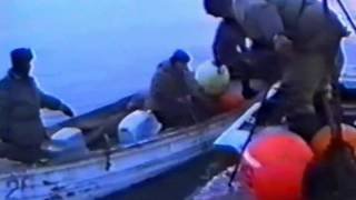 Охота на кита, разделка