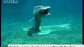 Requin rare !