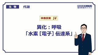 【高校生物】 代謝14 異化:呼吸「水素[電子]伝達系」(14分)