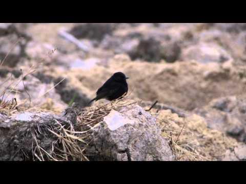 Tiếng chim hót đầu năm