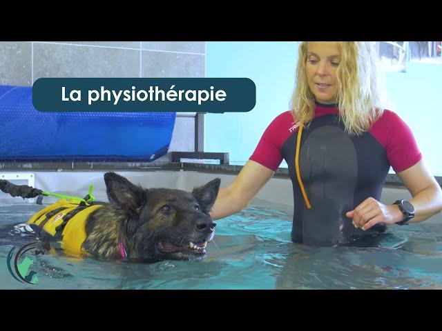 La physiothérapie à la clinique vétérinaire Saint Roch