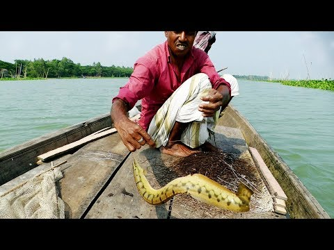 Do You Believe This Fishing? Fish Catching From River By Fishhook Chain