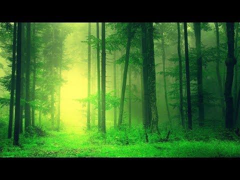 Relaxing Sleep Music 24/7: Deep Sleeping Music, Beat Insomnia, Relaxing Music, Sleep Meditation - Поисковик музыки mp3real.ru