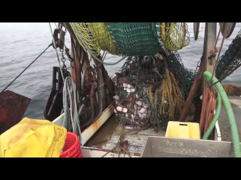 Community Supported Fisheries: The Basics