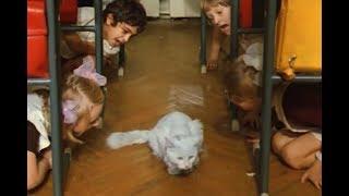 Голубой кот (1976) Алла Пугачева