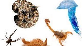 Globo Rural ,os dez animais mais peçonhentos do Butantan MP3