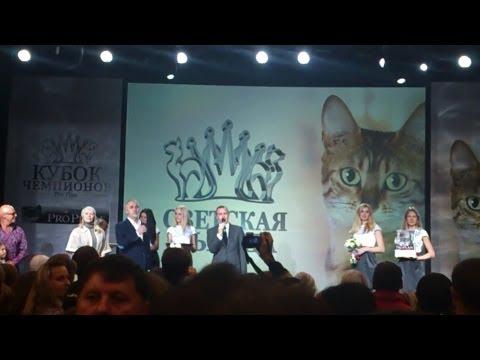 Кубок чемпионов Pro Plan выставка кошек 26 октября 2013. Часть 2.