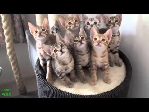 Видео прикол: подборка с котами и котятами