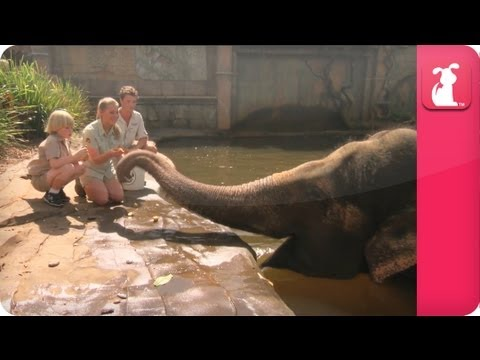 Bindi & Robert Irwin feature Siam the  Asian Elephant - Growing Up Wild