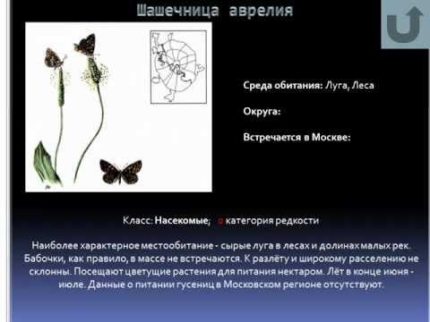 Путешествие по страницам красной книги Москвы 2