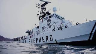 Op Milagro V - Sea Shepherd Finds First Totoaba Nets of the Season