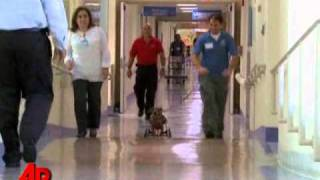 Video Essay: Paralyzed Pooch To Therapy Dog