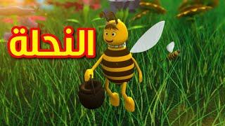 النحلة - طيور بيبي | Toyor Baby