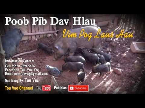 Poob Pib Dav Hlau Vim Pog Laus Hau 16-6-2017 thumbnail