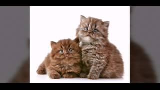 Животные милашки и тигрята и собачки и конечно котята