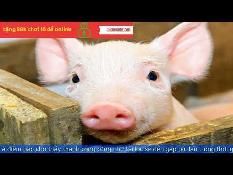 giải mã giấc mơ thấy lợn tại kqxsmb.info