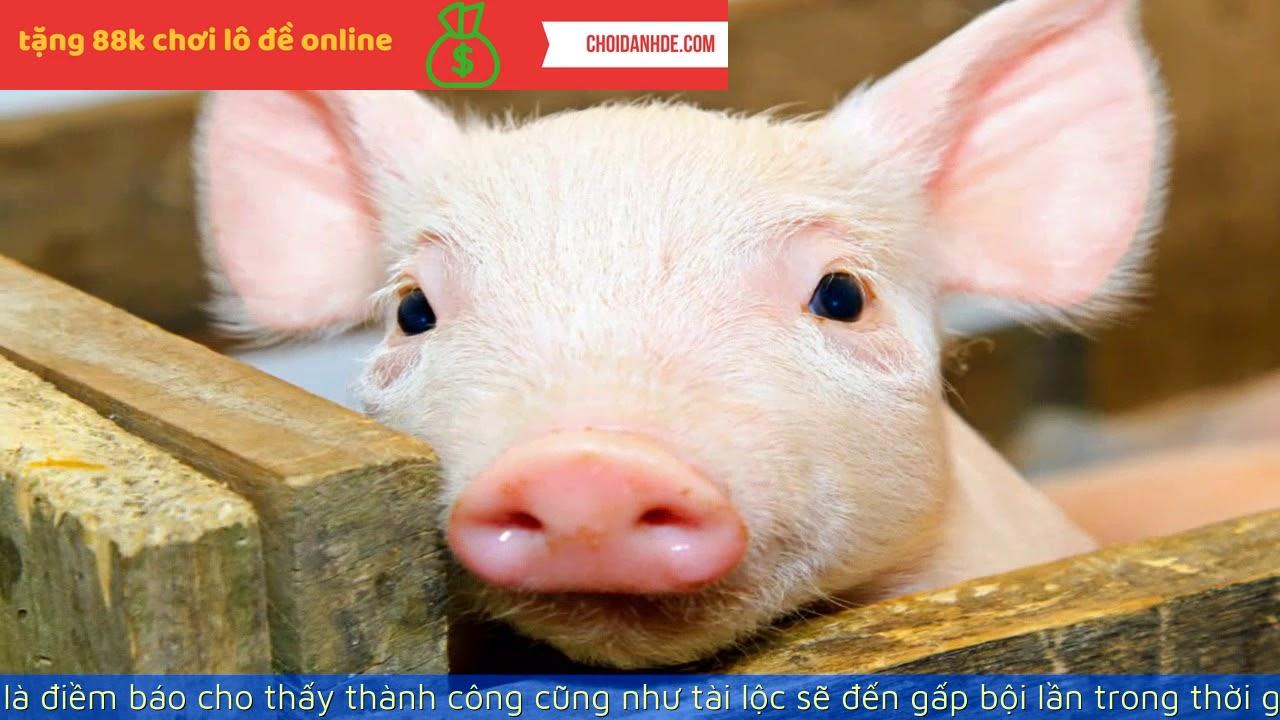 Mơ thấy heo là điềm báo gì? Mơ thấy lợn và những điều thú vị xung quanh bạn chưa biết.   LIXI88.COM