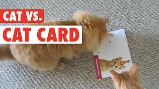Cat's Birthday Card Revenge