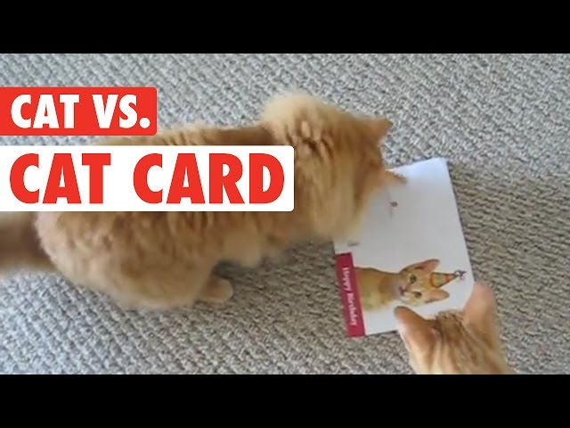 Cat's Birthday Card Revenge