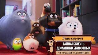 Лёша смотрит: «Тайная жизнь домашних животных» (The Secret Life of Pets)