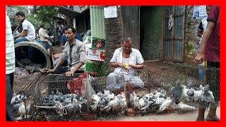 Video pigeon hat mirpur-1 today 14-07-2017 part-2 & Best breeding fancy pigeon market by (BD birds video) download MP3, 3GP, MP4, WEBM, AVI, FLV Januari 2018