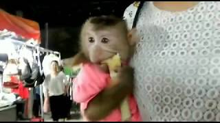 Monkey Baby Nui | Nui scared when Nui ride without her mother