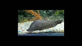 Морские рыбки, подводный мир  Золотая рыбка  Рыба клоун  Акула  Рыба еж   Marine fish, underwater wo