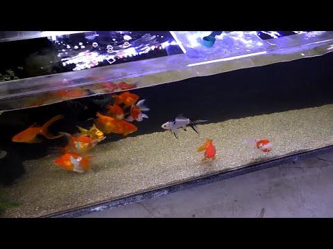 MY FISH ROOM UPDATE - AQUARIUM COOP
