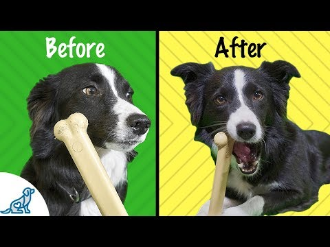 Chew Toy Training - 7 Simple Ways To Train Your Dog To Like Chew Toys!
