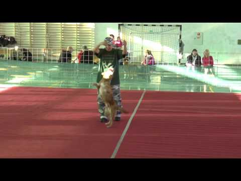 Gyurasics Erika - Rocky | 2016 - Dog Dancing Hungarian Open