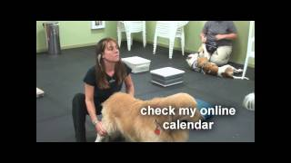 Canine Massage Therapy