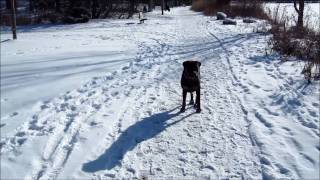 My Obedient Dog - Hand Signals In Snow