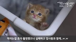 아기고양이 육아일기_봉봉이3일차 20180131