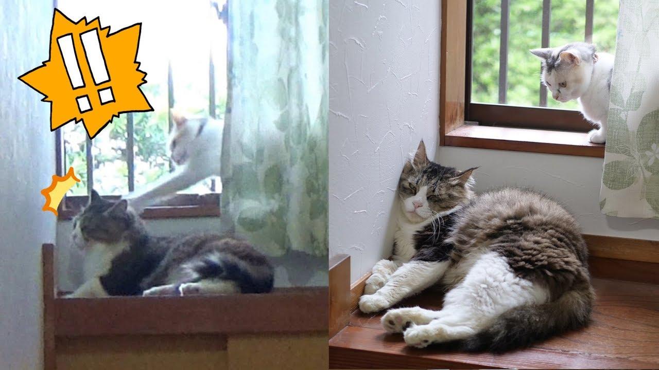 エコー 猫のいびき 犬、猫の下痢や嘔吐が続いている…IBD(炎症性腸疾患)ってどういう病気?