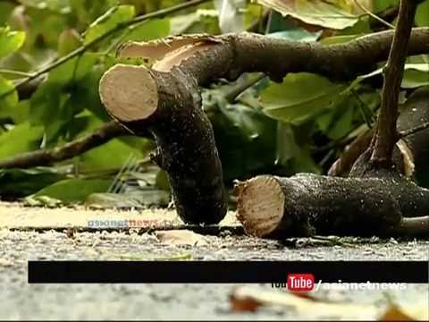Shade trees in Beach Hospital cut down with out permission