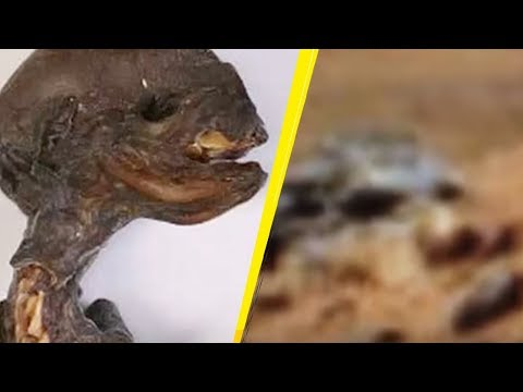5 Alien Species Caught By Nasa On Mars!