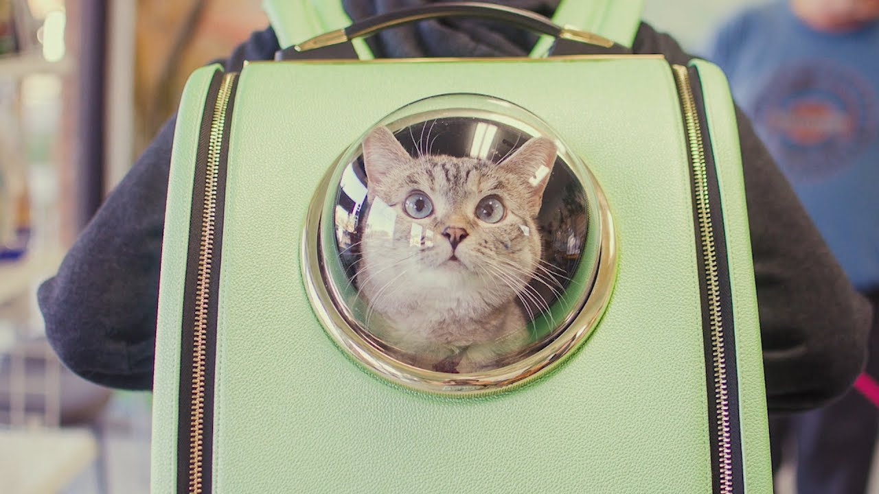 0e65149d62f6 Cat Backpack