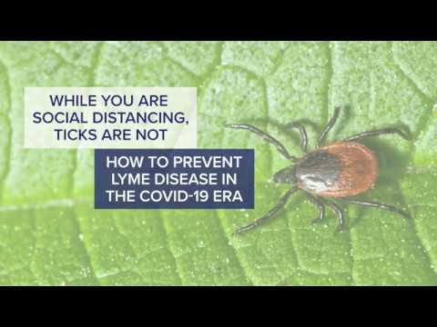 while-you-are-social-distancing,-ticks-are-not---tips-on-protecting-yourself-from-lyme-disease