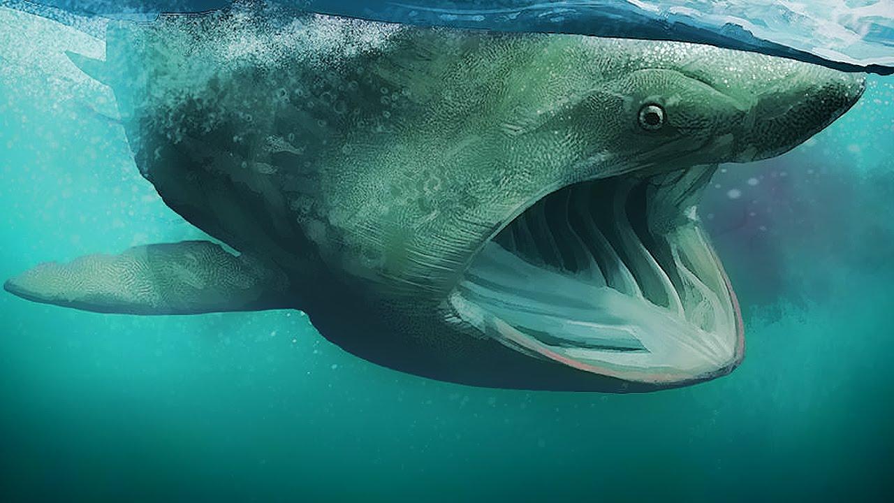 Los 5 tiburones mas grandes del mundo tiburon m s grande for Cuantos tipos de arboles hay en el mundo
