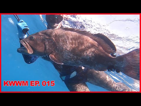 $1000 Day  Florida Keys - 160# Of Grouper {Commercial Spearfishing} Key West Waterman EP. 015