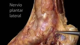 Nervioso en tobillo cerca la dolor pierna del