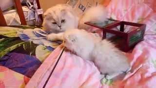 Котик Филипок и его сынок