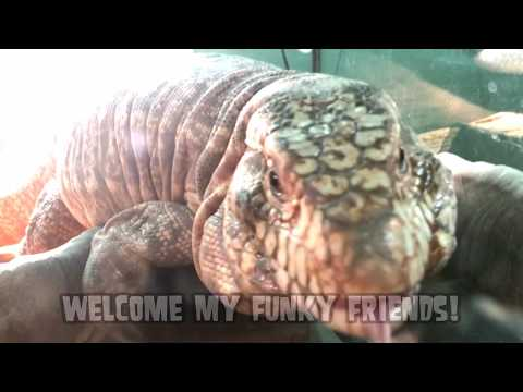 World&39;s Greatest Animals; Largest & Most Bizarre Sharks Dogs Sea Creatures Snakes and More