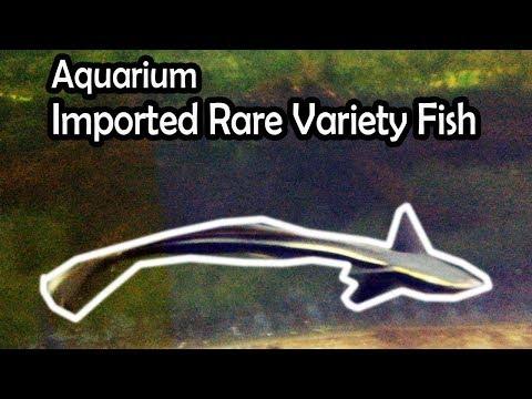 Imported Marine Shark | Aquarium Fish in Chennai