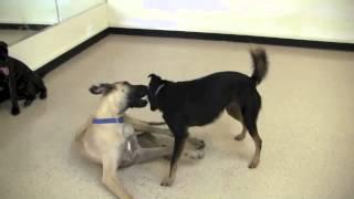 Socialization And Stimulation @canine Corral Dog Daycare