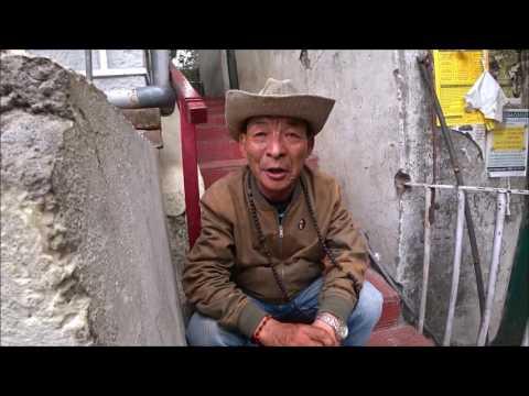 познакомиться с тибетцем