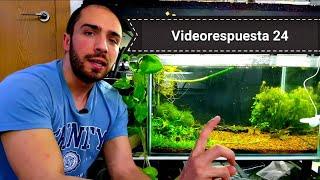 Videorespuesta 24 / Iluminación natural en los acuarios