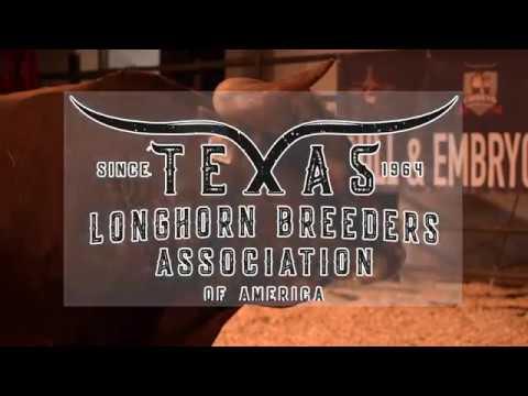Texas Longhorn Breeders Association of America 2018