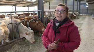 Agriculture : les éleveurs creusois appellent à l'aide