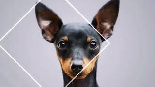Животные|обои для рабочего стола